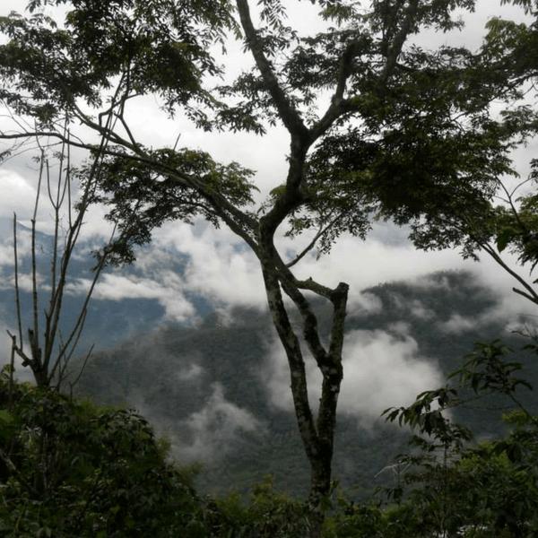 Pequeños Productores de la Selva Lacandona