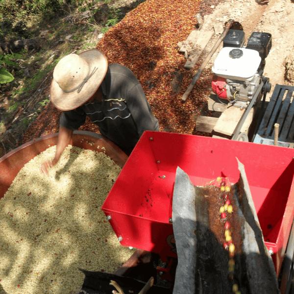 Pequeños Productores del Soconusco