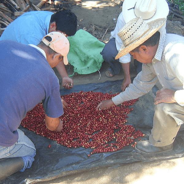 Pequeños Productores de Jaltenango